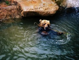 Grizzly Bear's Bath Toy by Due-South