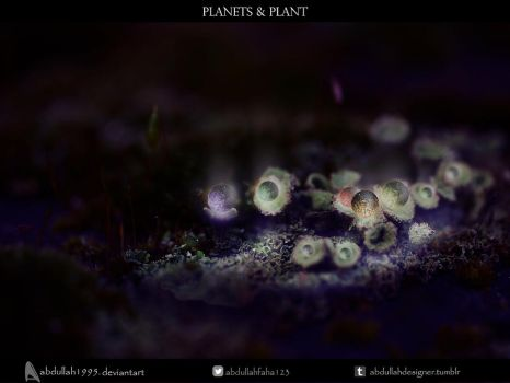 Planets and Plant (Sharpen) by ABDULLAH1995