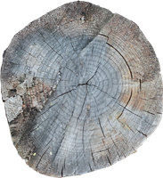 Tree ring 002 by sanchiesp