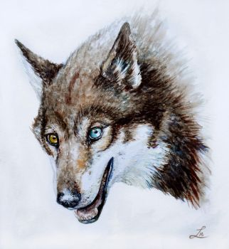 Heterocromia wolf by LauraMSS