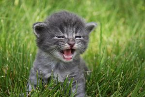 I am kitten hear me ROAR by novablue