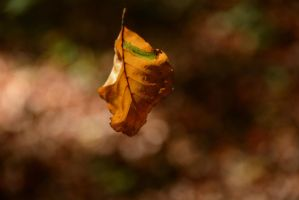 Falling Leaf by LuDa-Stock