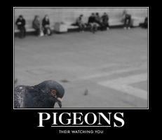 pigeon by pyro3366