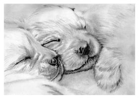 Sleeping Beauties by jolabrodnica