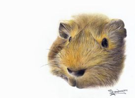 Ginguls the Guinea Pig by ginas-cakes