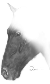 Puverian Paso Horse (Never finished) by Phoenix1583
