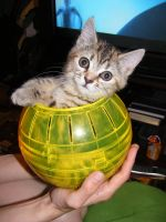 Cat in a hamster ball by make-a-snappy