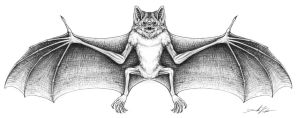 Vampire bat Illustration by wrelm