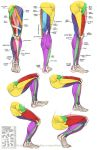 Anatomy - Leg Muscles by Quarter-Virus