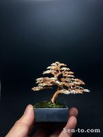 A large three-color wire bonsai tree by Ken To by KenToArt