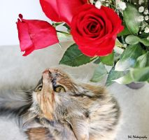 Smell the Roses by 1000--Words