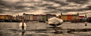 View of the Rasinovo quai by tomsumartin