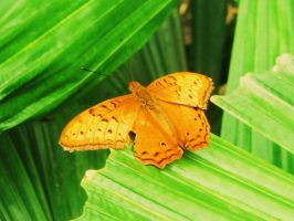 Orange Butterfly by xAquaLinax