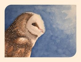 Barn Owl by Jb-612