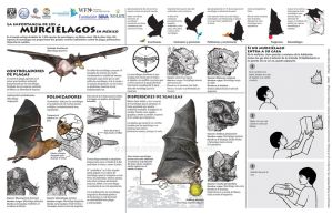 El valor de los murcielagos-The value of bats by AngelCaido