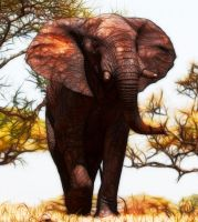 Out of Africa by Lashington