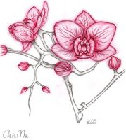 orchids by ChinMa