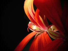 Red flower by KGY-Graphic