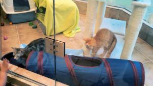2014 The Rescue Pawtique Kittens 9 by BigMac1212