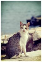 The SeaCat by JBphotographer