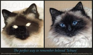 before and after Schuey by LouiseMarieFineArt