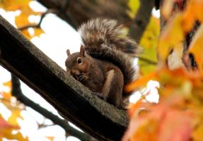 Squirrel up a tree. by sweatangel