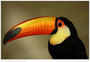 Amazing Beak by In-the-picture