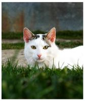Kitty Cat In The Grass by olushia-loosiczka