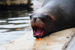 Sea Lion 3 by R4xx4r