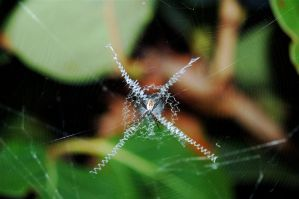 content in his web. by diploid