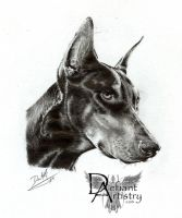 Doberman Portrait by superchickenn123