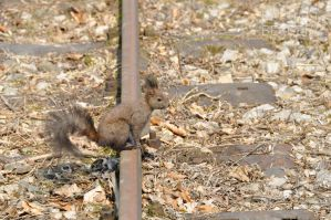 squirrel by Tyc01101
