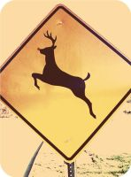 Reindeer Crossing by Junthor