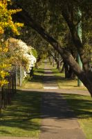 The street outside my house by StellaPhotos
