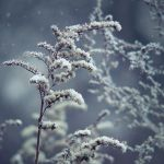 frozen breath IV by JoannaRzeznikowska