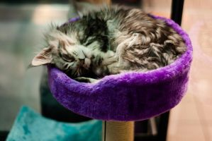 Dreaming of Annoying Mice by Kaltenbrunner