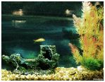 Fish Tank. by fromthehorizon