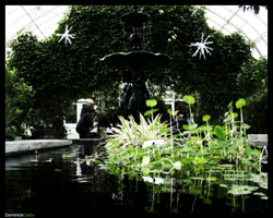 Over the Lilly Pads Manip by Dominick-AR