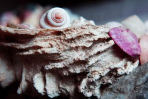 shell on shelf 2 by Sa7ar555