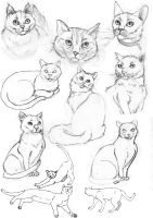 Cats by s-traszydlo