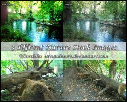 German Nature Stock Images by ArtandMore