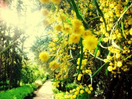 Mimosa path. by Perfect-sHe