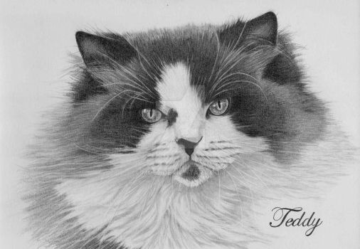 Graphite drawing of Teddy by mo62