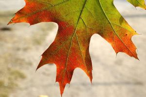 Autumn leafs-08 by Dashka-bird