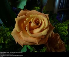 Orange Rose Stock 2 by Melyssah6-Stock
