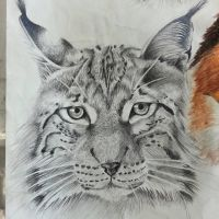 Lynx by OrhideArt