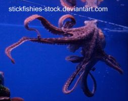 Octopus 1 by Stickfishies-Stock