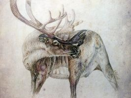 Reindeer by ansent