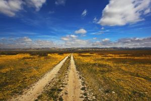 The Long and Winding Road V by ernieleo