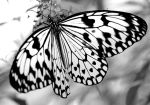 Butterfly by JimmyJam75